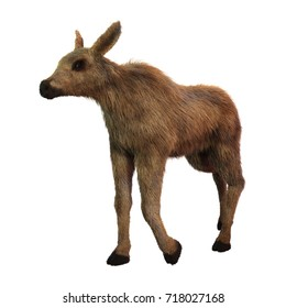 3D rendering of a moose calf isolated on white background