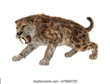 3D rendering of a saber tooth tiger isolated on white background