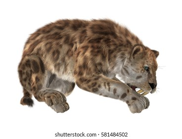 3D rendering of a sabertooth isolated on white background