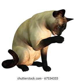 3d rendering of a siamese cat who cleans itself as illustration