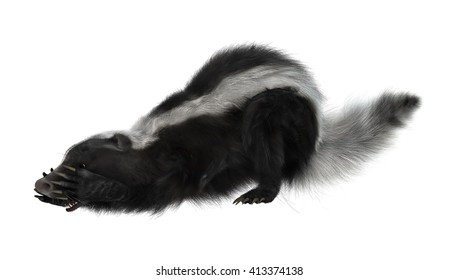 3D rendering of a skunk isolated on white background