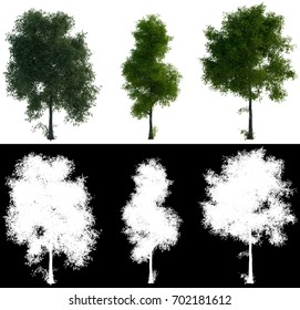 3d rendering three tree perfect isolated on White Background with Detail Raster Mask.