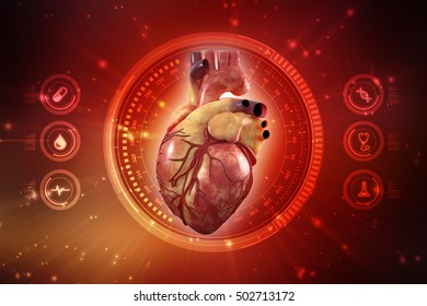 3d renderingHuman Heart - Anatomy of Human Heart