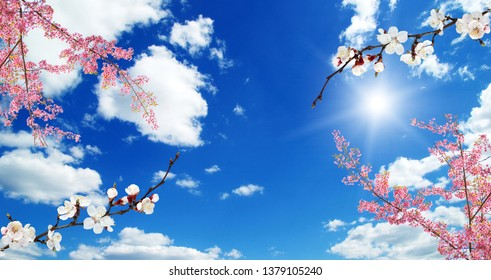 3d sky, beautiful flowers, ceiling background
