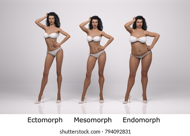 3D standing female model with 3 body types illustration : ectomorph (skinny type), mesomorph (muscular type), endomorph(heavy weight type), Front view
