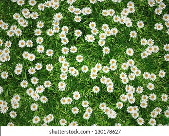3d sunny flower meadow - full of daisies