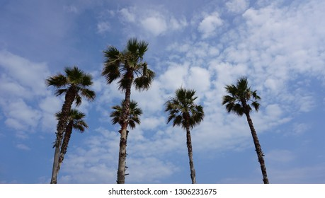 4 or 6 tall palm trees stand against a blue sky with clouds, summer time in Spain, Tarragona