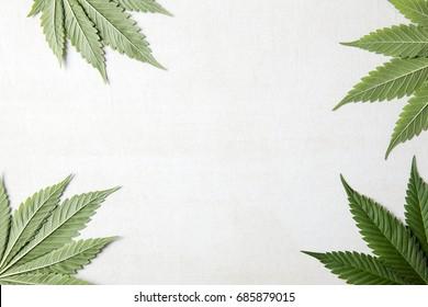 4 Canabis leaf