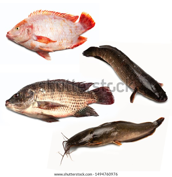 4 Kinds Fish That Thai People Food And Drink Stock Image 1494760976