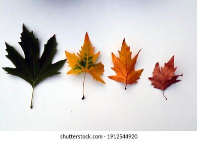 4 leaves symbolizing life and seasons