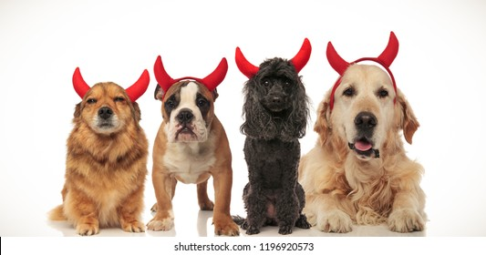 4 little dogs wearing halloween devil costume posing together, collage image