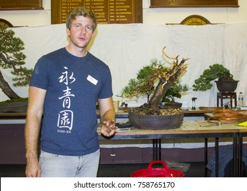 4 November 2017 Bjorn Bonholm  in the early stages of creating a Scots Pine (Pinus Sylvestris) bonsai in a public demonstration in Belfast in Northern Ireland