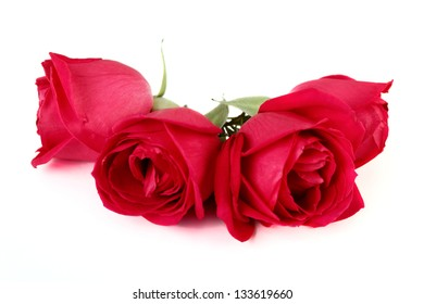 4 Open Roses over white background