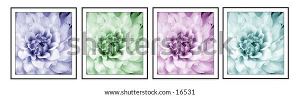 4 segment flowers