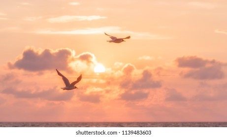 45/5000 flying seagull on sunset background