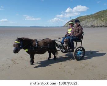 4th May 2019- A miniature Shetland pony and carriage, with two ladies and a cute Cockatoo dog on the sandy beach at Pendine, Carmarthenshire, Wales, UK.