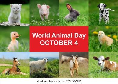 4th October. World animal day