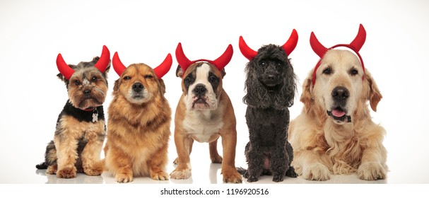 5 adorable puppies dressed as devils for halloween, collage image