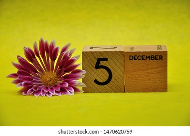 5 December on wooden blocks with a pink and white aster on a yellow background