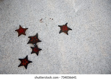 5 starfish I photographed on a breakwater. There are five starfish.