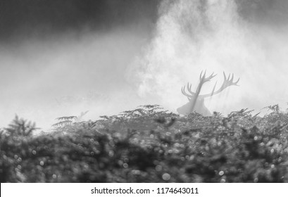 500px Photo ID: 163148217 - Richmond Park, London.