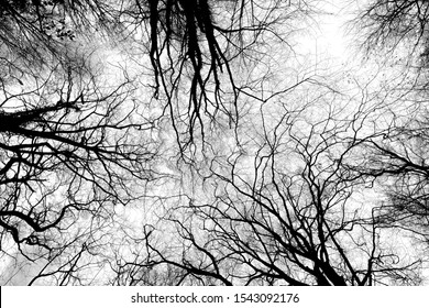 500px Photo ID: 275357979 - Looking straight up in Queen's Wood, Highgate, London.