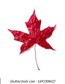 5-blade red maple leaf on a white background