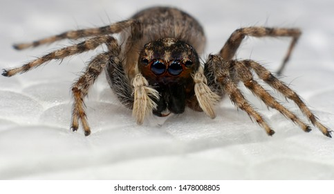 Six Legged Spider Images Stock Photos Vectors Shutterstock