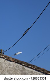 6 little black birds perched on an electric wire with blue sky background