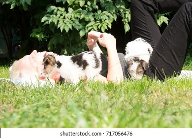 6 week old tricolor fox terrier puppy playing outside in the grass in the garden