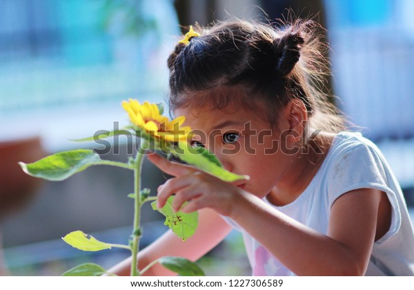 6 year old Asian girl in her backyard nature class.Girl plant and take care,  waiting,observe for sunflower components and growth.Nature classroom make independence and self-esteem in children.