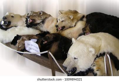 6th November 2013, Quebec City, Quebec, Canada: Pelt of a dead wolf, fox, black bear and polar bear for sale on isolated