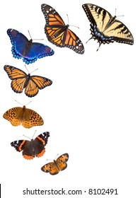 7 different butterflies are arranged on a white background. From bottom is northern crescent, painted lady,fritillary,viceroy,red-spotted purple,monarch, tiger swallowtail.