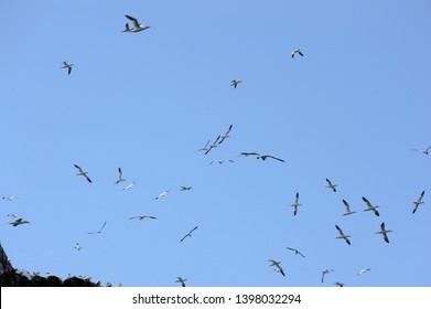 The 7 islands off Perros Guirec in Brittany, paradise for birds