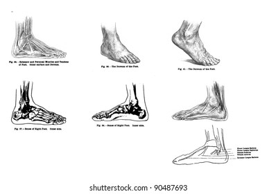 Foot Draw Images, Stock Photos & Vectors | Shutterstock