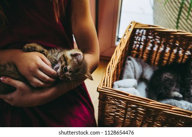 7 years little  girl paying with the kittens