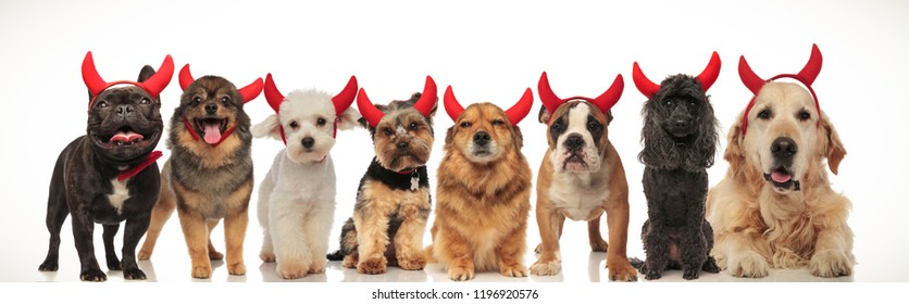 8 adorable dogs posing together for halloween, collage image