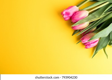 8 March Happy Women's Day. Spring concept. Pink tulips on yellow background. Copy space