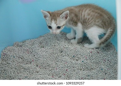 Sandbox Cat Stock Photos, Images & Photography | Shutterstock