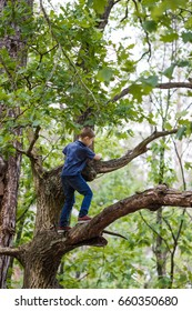 8 years old boy climbing high tree in the forrest. People concept - Overcoming the fear of heights