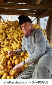 80 years old farmer in his barn full of corn cobs