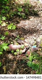 8/10/2019 Barberton, Ohio. trash/garbage laying on the ground. an aged kickball rots on a forest floor.