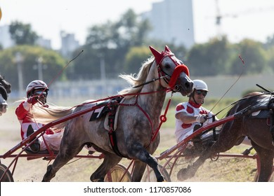 "8/25/2018 Russia, Moscow, Central Moscow hippodrome. Tests of horses of trotters on the prize ""Cup of Miners"". Two gray horses harnessed in two-wheeled crew compete in speed trot, enter the turn"