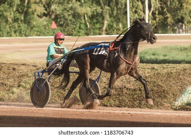 "8.26.2018 Russia, Moscow, Central Moscow hippodrome. Test of horses, jumps on the prize ""Cup of Miners"". The horse harnessed in a carriage trots to the finish"