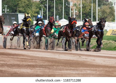 "8.26.2018 Russia, Moscow, Central Moscow hippodrome. Tests of horses of trotters on the prize ""Cup of Miners"".  The group of horses harnessed in a carriage trots to the finish. Horses compete in speed"