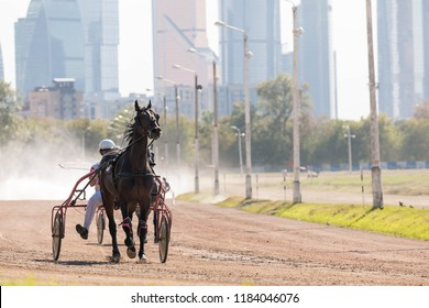 "8.26.2018 Russia, Moscow, Central Moscow hippodrome. Tests of horses of trotters on the prize ""Cup of Miners"". Horses run on the sandy road, kicking up dust from hoofs. Moscow city background"