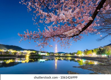 83 Tower is a landmark of Daegu city at night and cherry blossom tree during the spring season this area is popular sakura spot at in Daegu city South Korea.