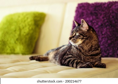 9 year old male tabby cat lying on a couch in his living room -- image taken indoors using natural light (image taken in Reno, Nevada, USA)
