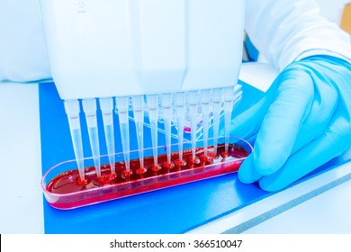 96 well plate for PCR processing, microbiological laboratory