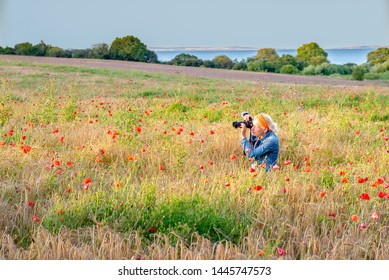 Aarhus, Denmark - July 7th, 2019. A woman photographer taking pictures in a field of poppies in the countryside, Jutland, Denmark.